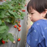 【台北】台北近郊踏青採果好去處-內湖‧白石湖觀光農場之碧山草莓園