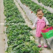 【麥芽趴趴走】20150227採草莓去!