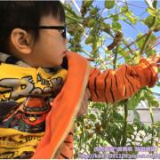 『台北景點』清香農場採果趣x嘿喲~拔蘿蔔~都市裡的一日小農夫!