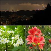 【台北】登仙跡賞桐花觀夜景 仙跡岩風景區