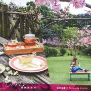 《台北八里》桃樂絲森林 在都市的世外桃源賞櫻花!綠意山中的花季盛宴
