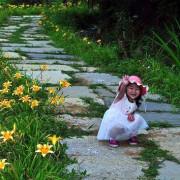 【三芝 / 賞花】牧蜂農場 - 金針花 & 凌霄花 爭妍鬥豔