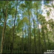 新竹尖石。再訪秀巒賞楓祕境。控溪吊橋&軍艦岩。塔克金溪(泰崗溪)