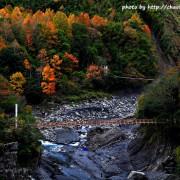 秀巒 - 控溪吊橋。媲美北海道的楓景
