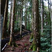 【桃園復興旅遊】東眼山國家森林遊樂區。遠離3C產品,走向自然的擁抱,來場森林浴吧!