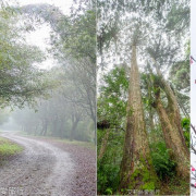 桃園景點》賞櫻秘境 東眼山國家森林遊樂區 穿梭電影般的迷霧森林夢幻場景 - 艾莉絲愛旅行