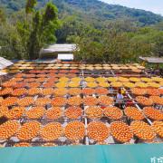 【新竹-新埔鎮】2020新埔柿餅節 味衛佳柿餅觀光農場 十月至隔年一月