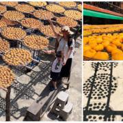 圓圓家出去玩-《新竹景點》味衛家柿餅觀光農場(免費景點)整個秋天都被橘色洗版,感受季節出門旅行就對了