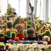 【新竹-新埔鎮】福祥仙人掌與多肉植物園