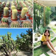 【新竹免費景點】福祥仙人掌與多肉植物園,城市小綠洲,IG網美的打卡熱點