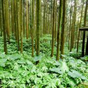 【新竹-關西鎮】馬武督探索森林