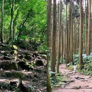 新竹關西森林步道 偶像劇拍攝地 綠光小學 馬武督探索森林 親子寵物友善