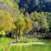 [ 南投⊙車埕]圍著儲木池走一圈.看著不同眼界的落羽松