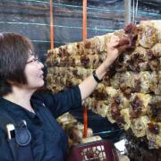 【脊梁山脈旅遊年】豐年農場採香菇、太空包DIY 還有美味的菇菇養生火鍋!