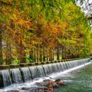 【花蓮-壽豐鄉】花蓮雲山水落羽松夢幻湖&優美的湖光山色