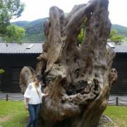 【花蓮旅遊】2015年6月林田山林業文化園區