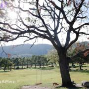 【台東TAITUNG-卑南文化公園Beinan Cultural Park】禾乃氏-擁有任意門的日子:來台東玩吧!漫步遼闊大草原、溜狗、野餐,吸收陽光芬多精