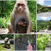 台東 泰源幽谷 花果山在台灣~跟孫悟空的猴子猴孫相見歡