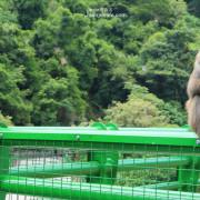 台東 東河慢旅 × 登仙橋遊憩區,進入幽靜山谷,巡訪台灣獼猴住處、天然後花園