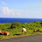 蘭嶼初體驗-蘭嶼探險與奇岩怪石