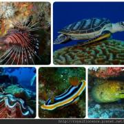 [遊記] 綠島 柴口氣瓶深潛 海底美麗世界 專屬一對一教練