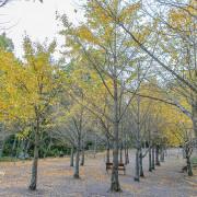 201121台中-武陵農場