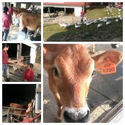在大草原上奔跑和我們一起找牛牛玩