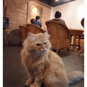 當小猴子遇上貓 隱藏版貓咪咖啡 *小猴子咖啡廳 Café No. 218*