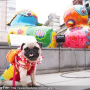 帶狗小孩去台北晶華酒店廣場看彩繪鴛鴦