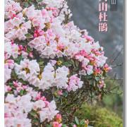 【南投】合歡山高山杜鵑.綻放高山生態的生命力