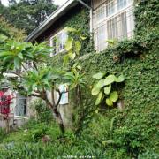 [漫步中西區]台南 隨光呼吸~自然.藝術.閑適
