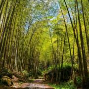 |南投‧鹿谷|炎炎夏日上山避暑去,溪頭自然教育園區