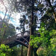 南投景點│漫步溪頭森林遊樂區,大口森呼吸!