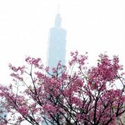 [城市櫻花趣]台北 信義區尋櫻記~台北街頭就能賞櫻花(四處賞花點)