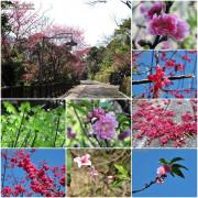 [旅遊烏來] 烏來瀑布公園的櫻花可以近距離的賞花拍照不用和別人共享擁擠的櫻花背景