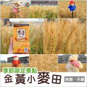 平鎮|北台灣最美的金黃小麥田.季節限定景點