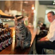 敦南●老木咖啡●貓咪與犬療癒系文青咖啡館
