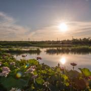 金山賞荷趣~鏡花水日、日燦蓮花