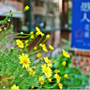 【高雄】推平日限定149套餐~愚人花園