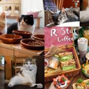 【台中西區】R星咖啡R-Star Coffee,7隻貓咪寵物友善餐廳,聚餐下午茶好去處