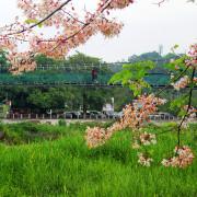 竹崎公園。春遊踏青。桃紅陣雨粉墨登場