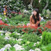 苗栗 花露農場 Flower Home~網美必來,美美繡球花牆好好拍