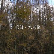 【台北】媲美落羽松.冷水坑水杉園.婚紗景點.陽明山國家公園.士林區