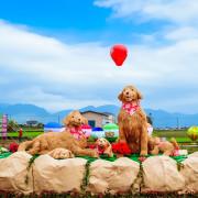 2018宜蘭景點-三星金狗年春節佈置,仿真天送埤車站、火車和隧道/三星氣球花海嘉年華