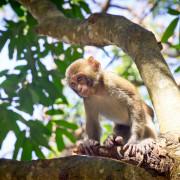 【玩樂.台南】猴子就在你身邊~南化烏山彌猴保護區