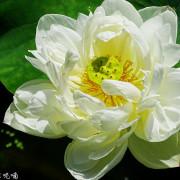 【台北-士林區】2019故宮博物院至德園賞荷