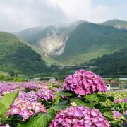 小油坑與繡球花一起入鏡只在陽明山竹子湖繡球花季限定- 遇見天使~Angela