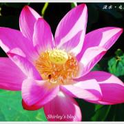 淡水賞荷秘境~屯山里石頭厝荷花田