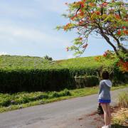台南私密景點~紫色浪漫朝顏花房 白河蓮子大餐