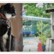 《花蓮咖啡小記》老木屋裡的文青花香味─Caffe Fiore珈琲花